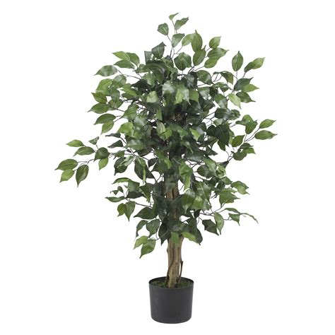 Potted Trees by 3 Foot Ficus Tree Potted 5298