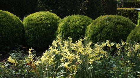 Buchsbaum In Form Knoten Zinsser Gartengestaltung Schwimmteiche