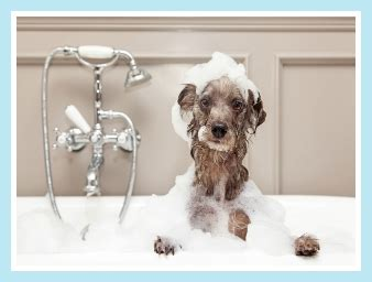 sudsy puppy the sudsy puppy grooming severna park md