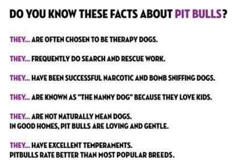 pitbull facts facts about pit bulls pitbulls don t blame the breed
