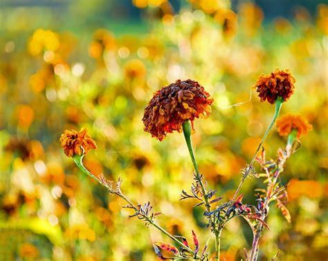 tentang bunga  layu  terbaru