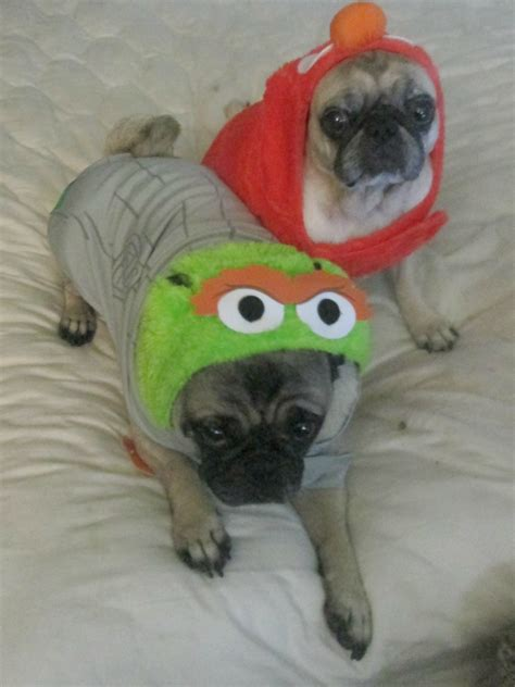 petsmart reviews petsmart costumes toys review emily reviews beds and costumes