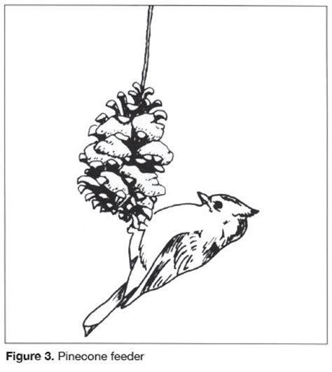coloring page bird feeder 91 coloring page winter birds free online pictures