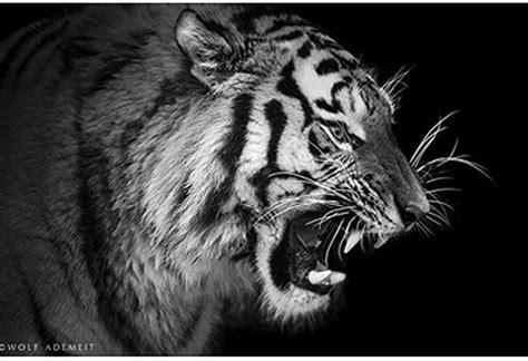 Imagenes De Animales En Blanco Y Negro | fotograf 237 as de animales en blanco y negro maestros para