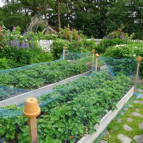 b q fruit netting garden netting images