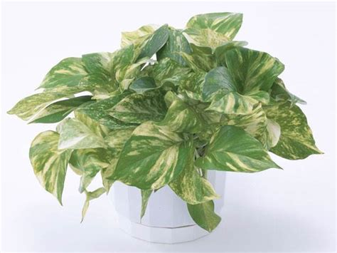 easy house plants the easiest indoor house plants that won t die on you