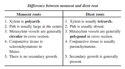 difference between monocot and dicot root cross section difference between root and stem pictures to pin on