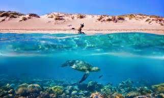 The 2nd place image by nathan wills was taken on the ningaloo reef