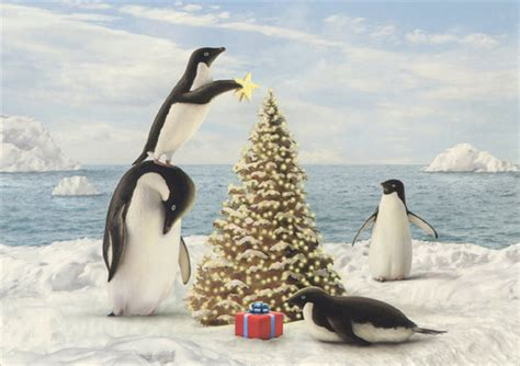 merry penguins alan giana christmas card  lpg