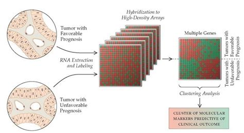 pattern analysis of tumor markers molecular genetics of cancer part 4