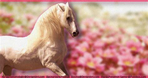 girly horse wallpaper girly horse graphic by bipbiplollipop on deviantart