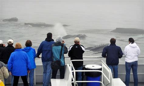 captain john boats coupons whale watching tour capt john boats groupon