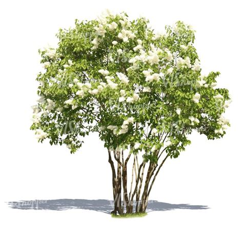 tree tree 96 best cutout tree images on plants