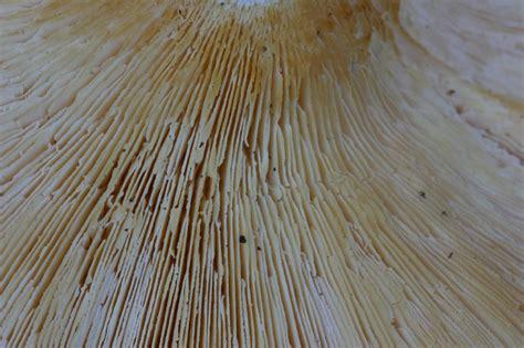 ubi perugia quiz facilissimo lentinus tigrinus forum natura