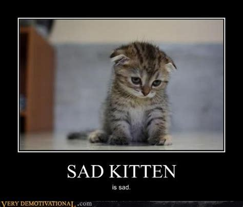 Sad Kitty Meme - sad kitten memes image memes at relatably com