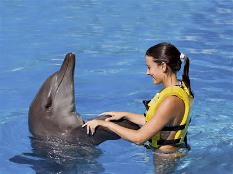 let 2 swim malaysia swimming lesson and life saving the best excursions in cancun for your vacations