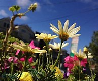 Image result for iPhone 5C camera Shots