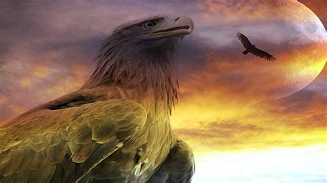 cool eagle wallpaper desktop bald eagles facts and pictures dowload
