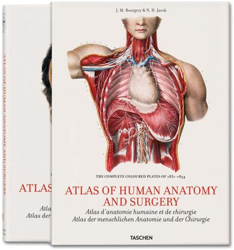 libro bourgery atlas of human jean marc bourgery atlas of human anatomy and surgery human anatomy anatomy and books
