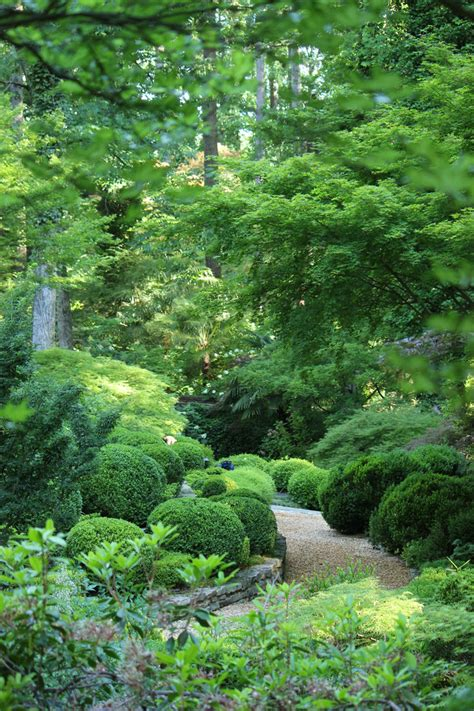 green garden on pinterest formal gardens buxus and garden design