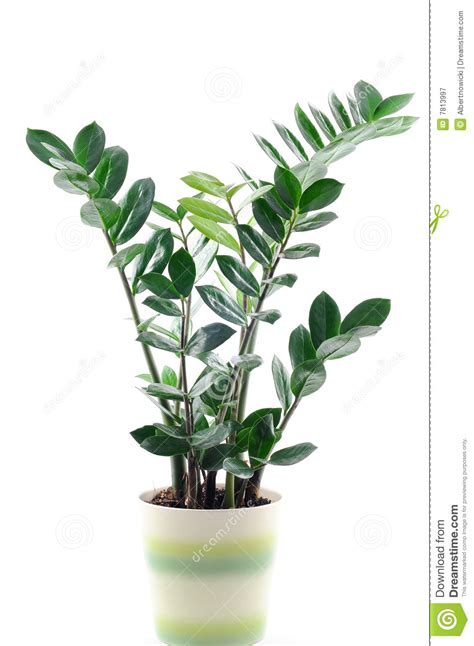 Large Outdoor Planters For Trees by Green Plant Pot Rseapt Org