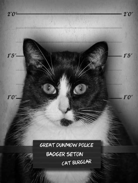cat burglar – Photography by Mark Seton