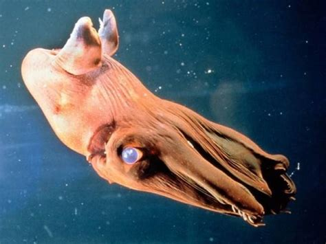 Design Your Own Home Remodeling by 13 Vampire Animals Vampire Squid Mnn Mother Nature