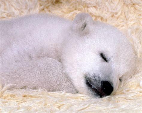 imagenes de animales para descargar fotos de animales cachorros para descargar en hd