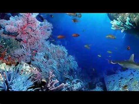 imagenes en movimiento de la naturaleza naturaleza en movimiento en el oc 201 ano youtube