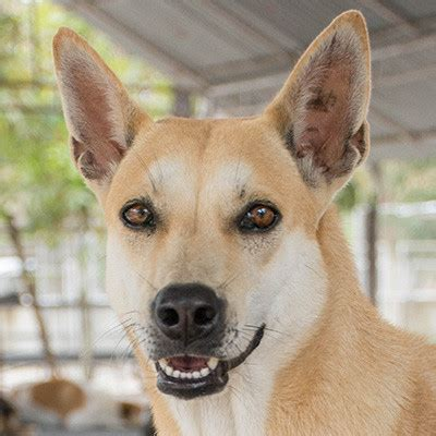rural rescue rural rescue saves thai dogs from trade capital community news