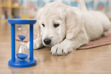 how to deal with puppy separation anxiety how to deal with separation anxiety in dogs puppy and