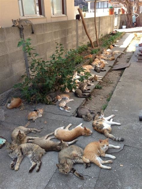 cat island in japan japan s quot cat island quot tashirojima has more feral cats