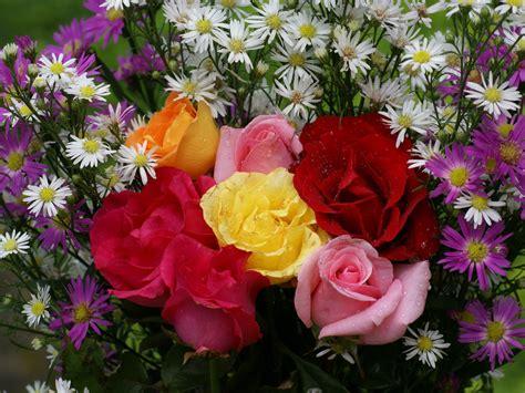 imagenes de rosas y flores hermosas colores en mi vida simplemente gracias