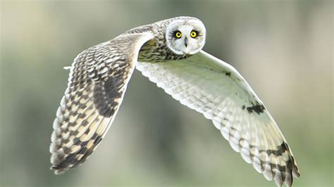 owls on cape cod 11 of the best bird spots for fall 183 national