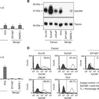 u protein level epcam overexpression in pca prevails at protein level