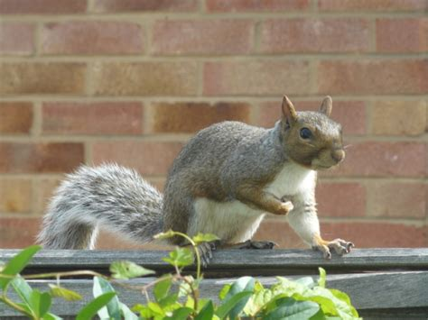 how to discourage squirrels in the garden garden ftempo