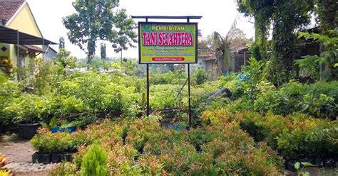 Lu Hias Taman tanaman hias jual tanaman hias di polewali