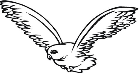 bird pictures to color bird coloring pages flying falcon bell rehwoldt