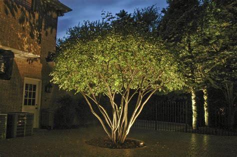 landscape lighting uplight trees tree uplighting search yard