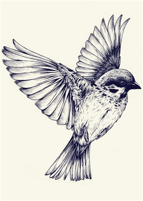 black and white bird drawings google search pinteres
