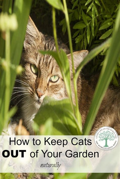 how to keep cats away from the garden naturally gardens