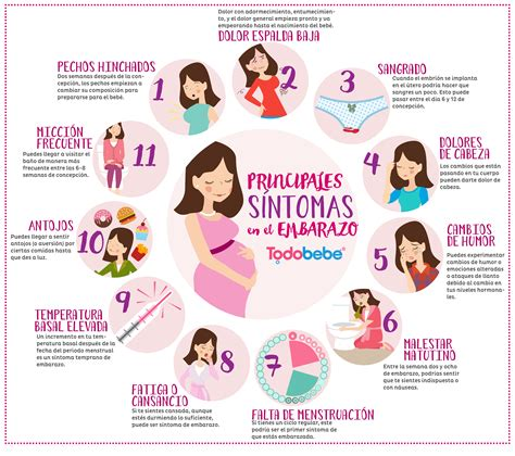 Calendario De Gestacion Sintomas Embarazo