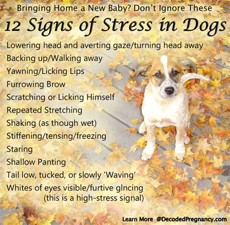 signs of stress in dogs preparing a for baby don t wait until you bring your infant home