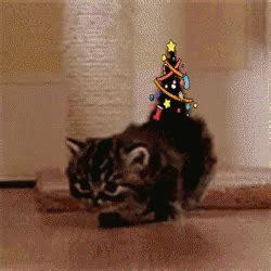 christmas cat christmas tree gif christmascat christmastree xmas discover share gifs