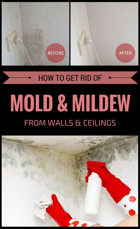 how to get rid of mold on walls in bedroom how to get rid of mold and mildew from walls and ceilings