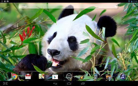 Panda Wallpaper Live