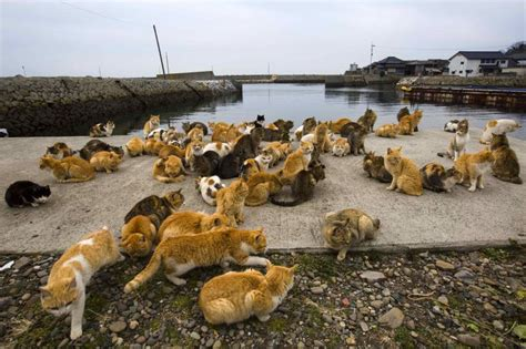 Felines Rule On Ehime S Cat Island The Japan Times | felines rule on ehime s cat island the japan times