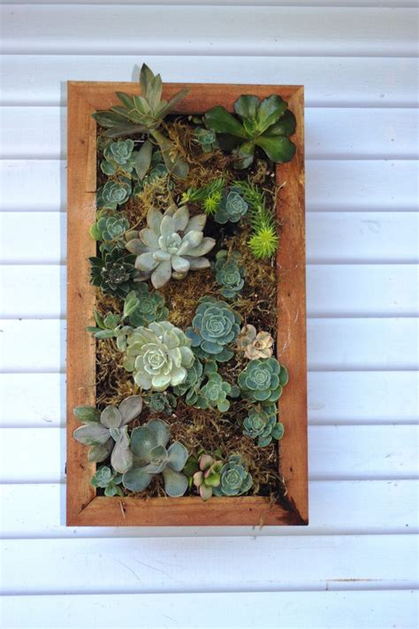 Vertical Hanging Wall Planter Box For Succulents Succulent Planter Box