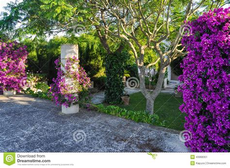 imagenes de jardines con bugambilias bugambilia stock image image of leaves nature beautiful