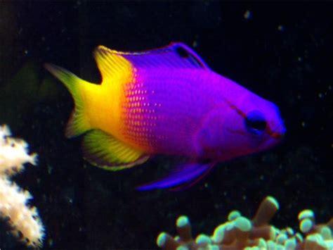 Aquascapes Online 1000 Ideas About Aquarium Fish Tank On Pinterest